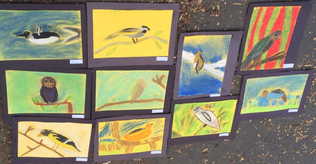 5th Graders use chalk pastels to draw a bird, inspired by John James Audubon's Wild Turkey.